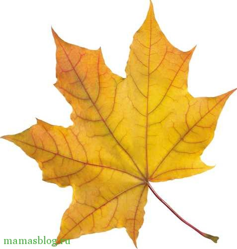 Шаблоны кленовых листьев шаблоны