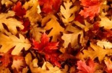 Осенние песни бесплатно