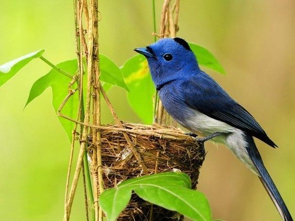 Как поют птицы?