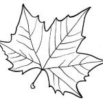 шаблоны кленовых листьев