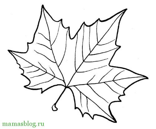Питомник декоративных культур Гуменюка Мирослава Степановича