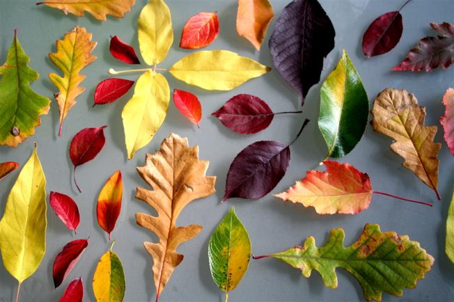 Коллаж листья картинки