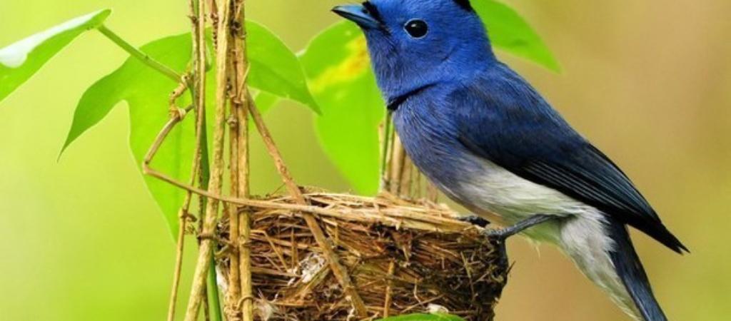 Как поют птицы? Слушать здесь >>>