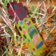 Пальчиковые краски Idigo отзыв