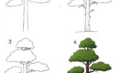 Как нарисовать дерево?