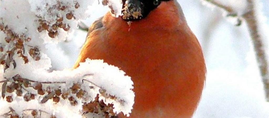 Признаки зимы