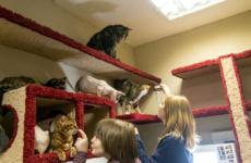Республика кошек в Санкт-Петербурге