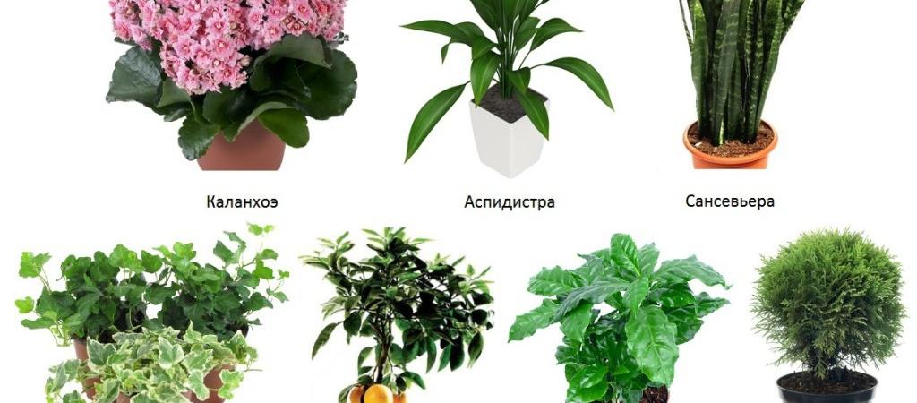 Растения для детской комнаты. Какие выбрать?